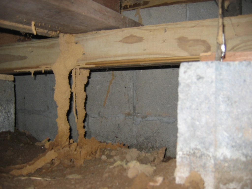 Termite-Inspection-1